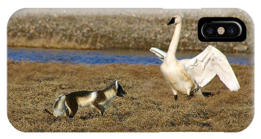 Fox IPhone X Case featuring the photograph Fox Vs Swan by Anthony Jones