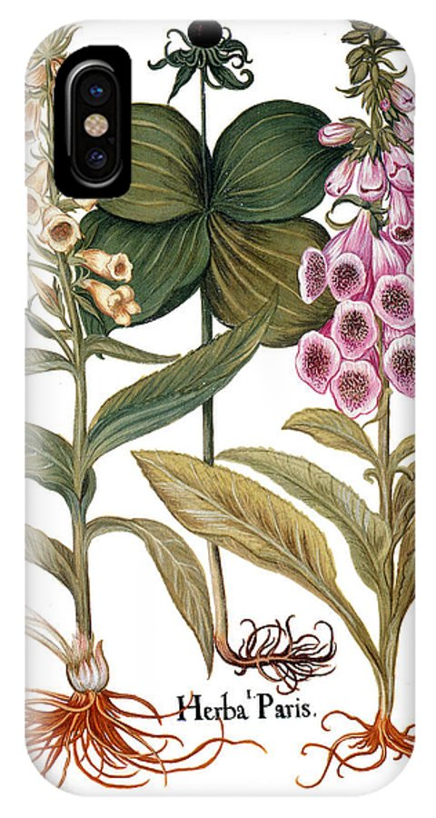 1613 IPhone X Case featuring the photograph Foxglove And Herb Paris by Granger