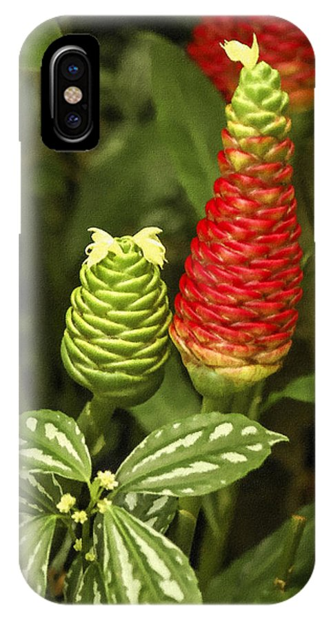 Red Pine Cone Ginger Lily IPhone X Case featuring the photograph Fragrant Red by Carolyn Marshall