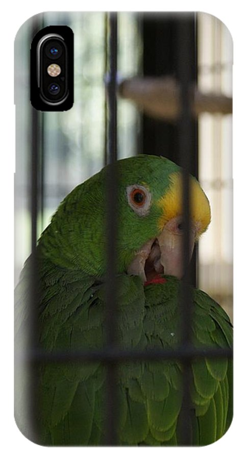 Parrot IPhone X Case featuring the photograph Framed by Shelley Jones