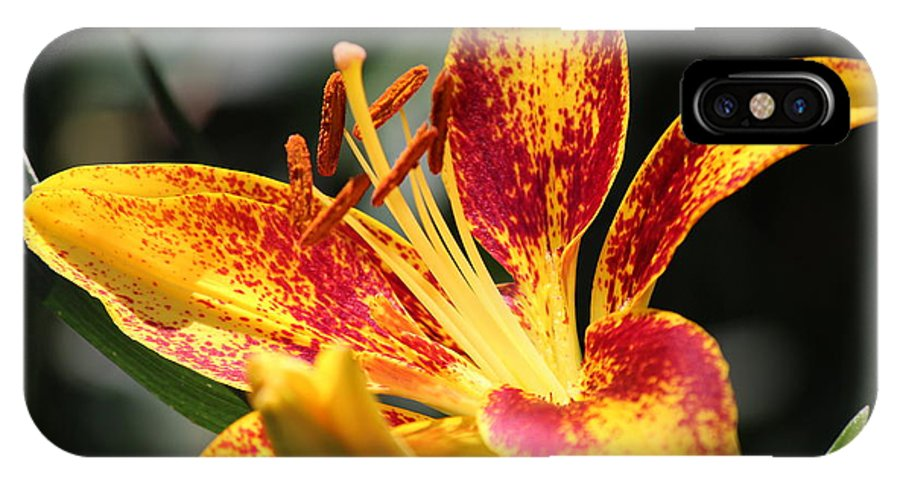 North IPhone X Case featuring the photograph Frans Hals Daylily Hybrid by Nicholas Miller
