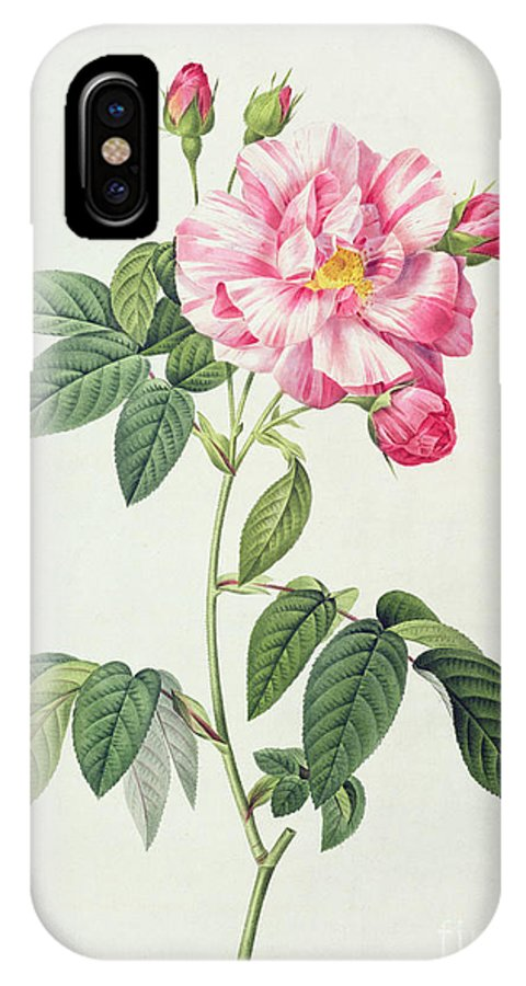 Rosa IPhone X Case featuring the drawing French Rose by Pierre Joseph Redoute
