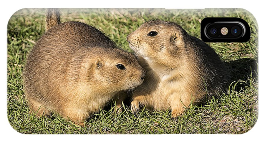 Friendly Prairie Dogs IPhone X Case featuring the photograph Friendly Prairie Dogs by Priscilla Burgers