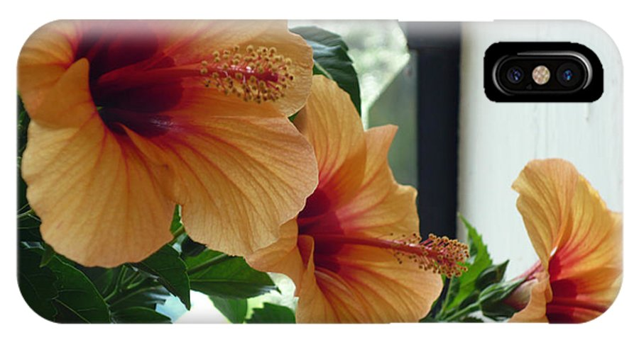 Photography Flower Floral Bloom Hibiscus Peach IPhone Case featuring the photograph Friends For A Day by Karin Dawn Kelshall- Best