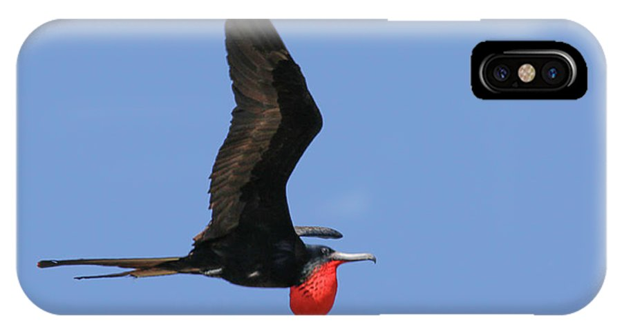 Isla Contoy IPhone X / XS Case featuring the photograph Frigate Flight by Gary W Baird