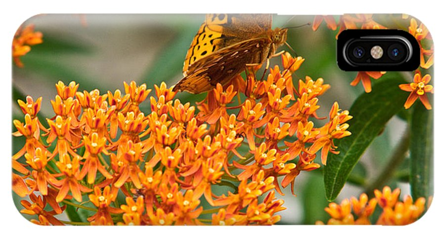 Frittalary IPhone X Case featuring the photograph Frittalary Milkweed And Nectar by Douglas Barnett