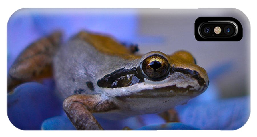 Animal IPhone X Case featuring the photograph Frog by Brenton Woodruff