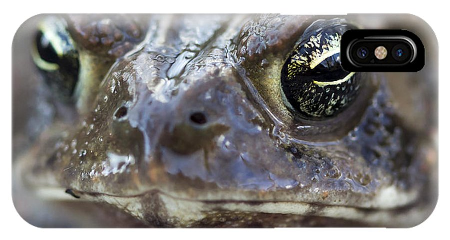 Frog IPhone X Case featuring the photograph Frog Eyed by Floyd Morgan Jr