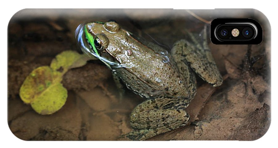 Frog IPhone X Case featuring the photograph Frog Pond by Paul Slebodnick