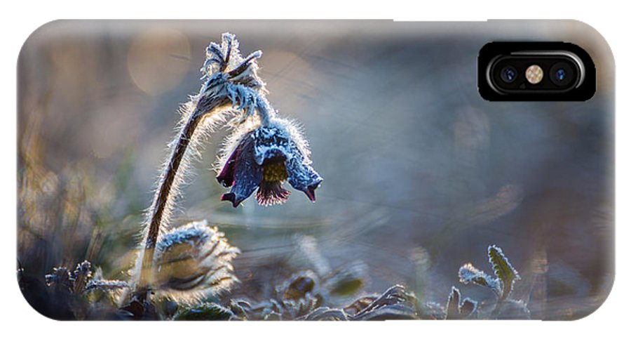 Flower IPhone X Case featuring the photograph Frosted Beauty by Davorin Mance