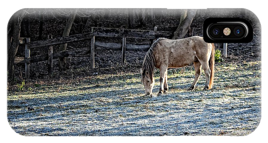 Horse IPhone X Case featuring the photograph Frosty Autumn Morning by Al Mueller