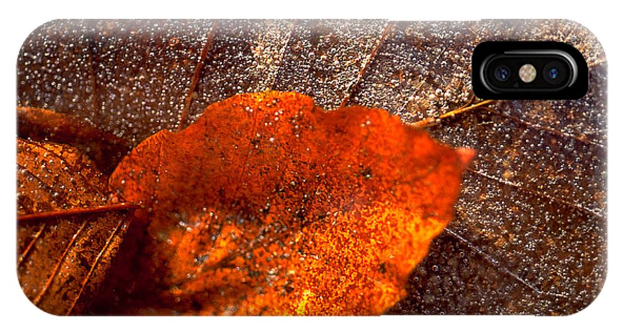 Leaf IPhone Case featuring the photograph Frozen Leaf by Michael Mogensen
