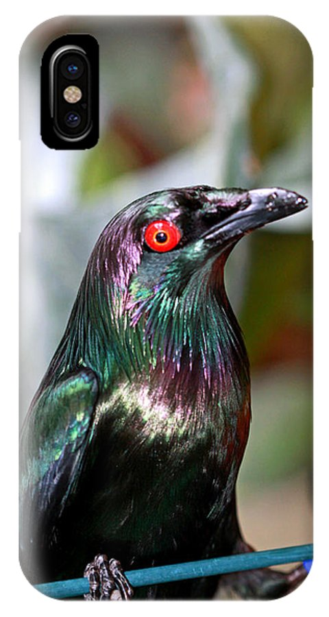 Bird IPhone X Case featuring the photograph Frozen by Paul Slebodnick