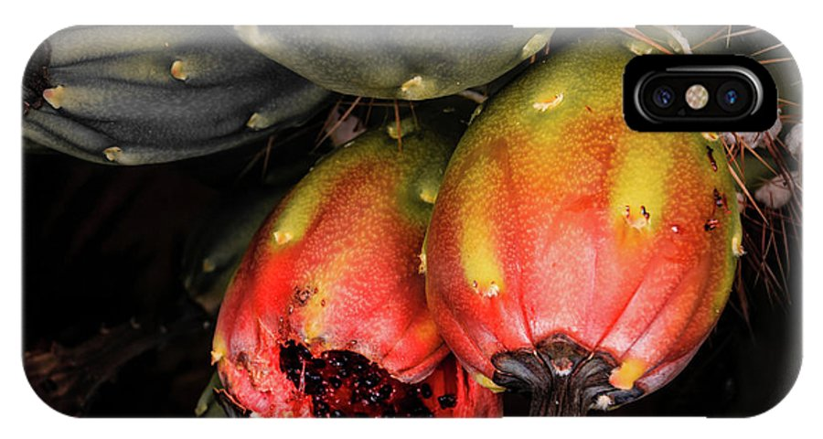 Saguaro IPhone X Case featuring the photograph Fruit Is The Star by Dennis Swena