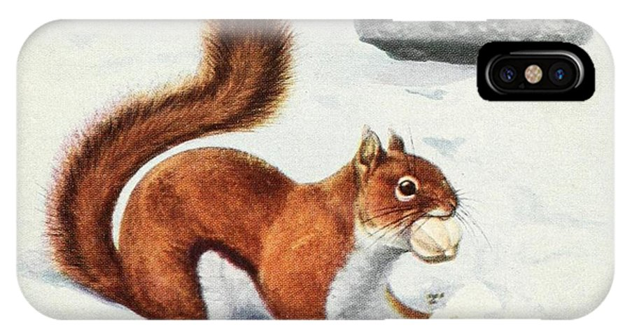 Fuertes IPhone X Case featuring the painting Fuertes, Louis Agassiz 1874-1927 - Burgess Animal Book For Children 1920 Red Squirrel by Louis Agassiz Fuertes
