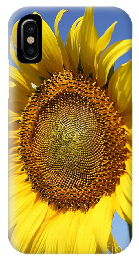 Sunflowers IPhone X Case featuring the photograph Full by Amanda Barcon