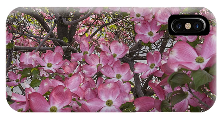 Dogwood IPhone X Case featuring the photograph Full bloom by Idaho Scenic Images Linda Lantzy