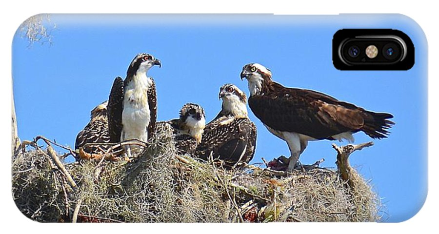 Osprey IPhone X / XS Case featuring the photograph Full House by Carol Bradley