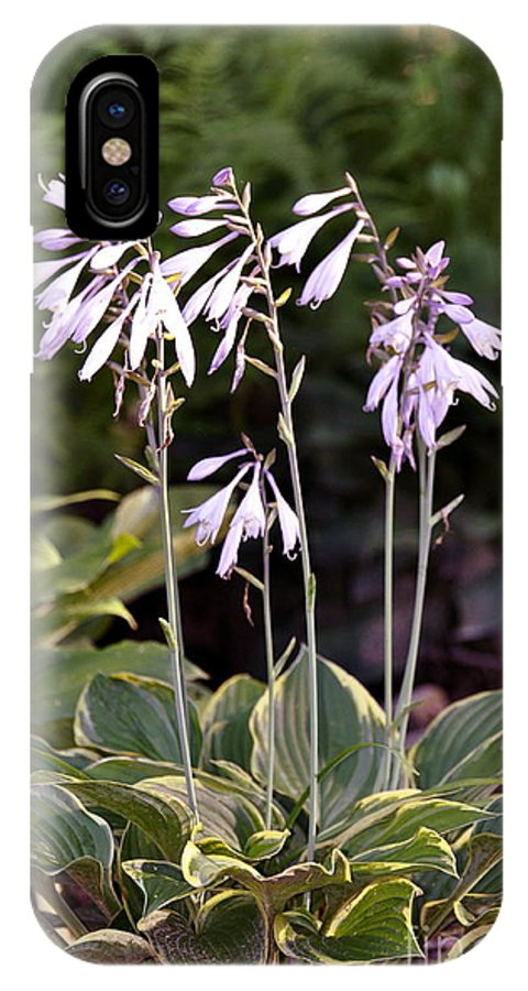 Purple Hosta Flower IPhone X Case featuring the photograph Funky Hostas by Penny Neimiller