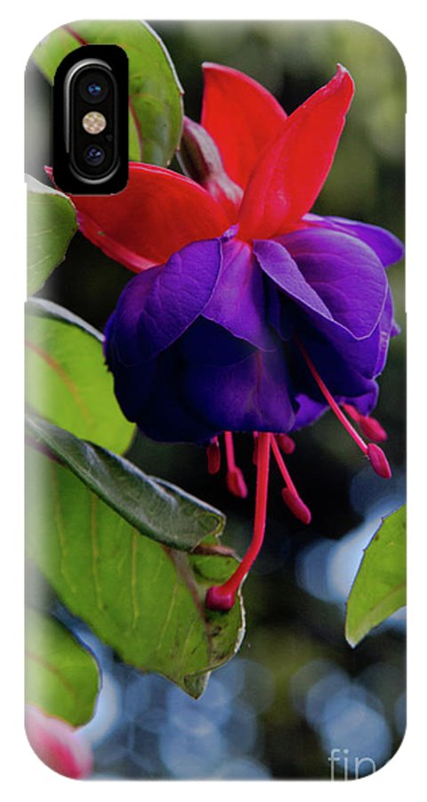 Flowers; Wildflowers; Ecuador; Tropical; Purple; Nature IPhone X Case featuring the photograph Fuschia by Kathy McClure
