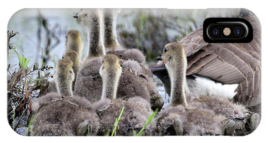 Geese IPhone X Case featuring the photograph Fuzzy Butts by Brook Burling