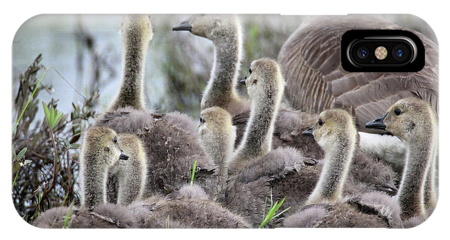 Geese IPhone X Case featuring the photograph Fuzzy Butts2 by Brook Burling