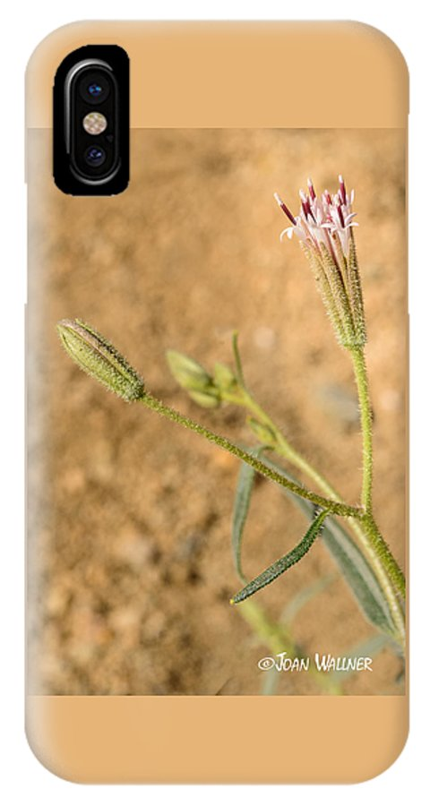 California IPhone X Case featuring the photograph Fuzzy Flower by Joan Wallner