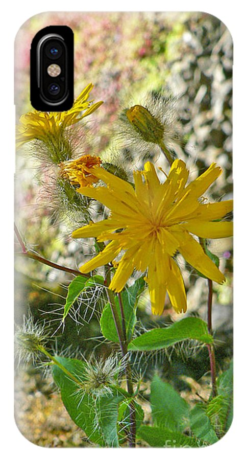 Flowers IPhone Case featuring the photograph Fuzzy by Larry Keahey