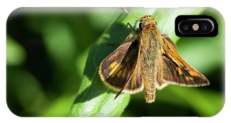 Brown IPhone X Case featuring the photograph Fuzzy Moth by Alida Thorpe