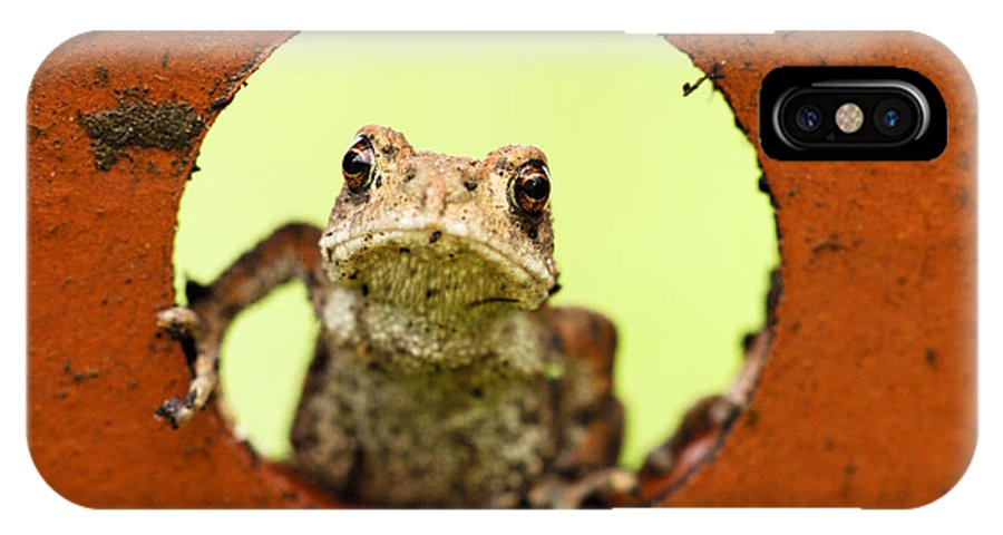 Toad IPhone X Case featuring the photograph Garden Visitor by Silke Magino