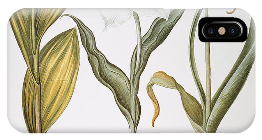 1613 IPhone X Case featuring the photograph Garlic, 1613 by Granger