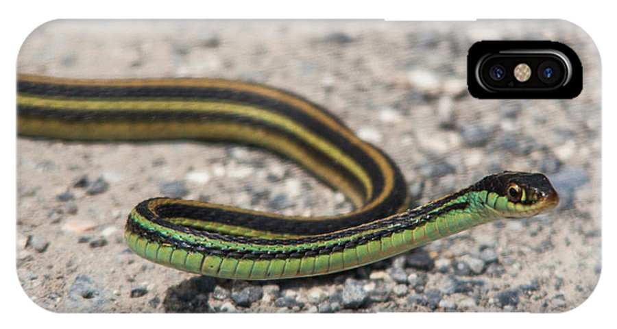 Atchafalaya IPhone X Case featuring the photograph Garter Snake by Bonnie Marquette