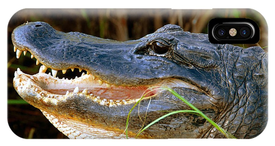 Alligator IPhone X Case featuring the photograph Gator Head by David Lee Thompson