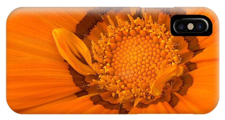 Flower IPhone X Case featuring the photograph Gazenia by Amanda Kiplinger