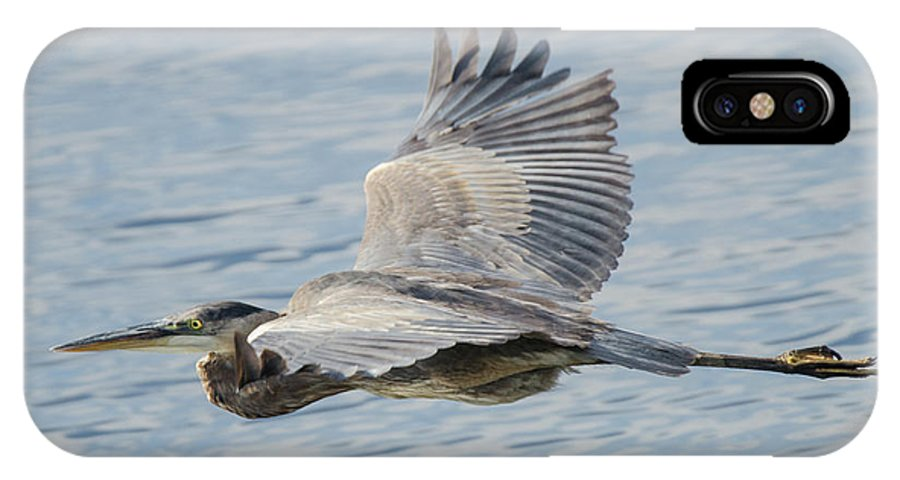 Bird IPhone X Case featuring the photograph Gbh Flight by Judd Nathan