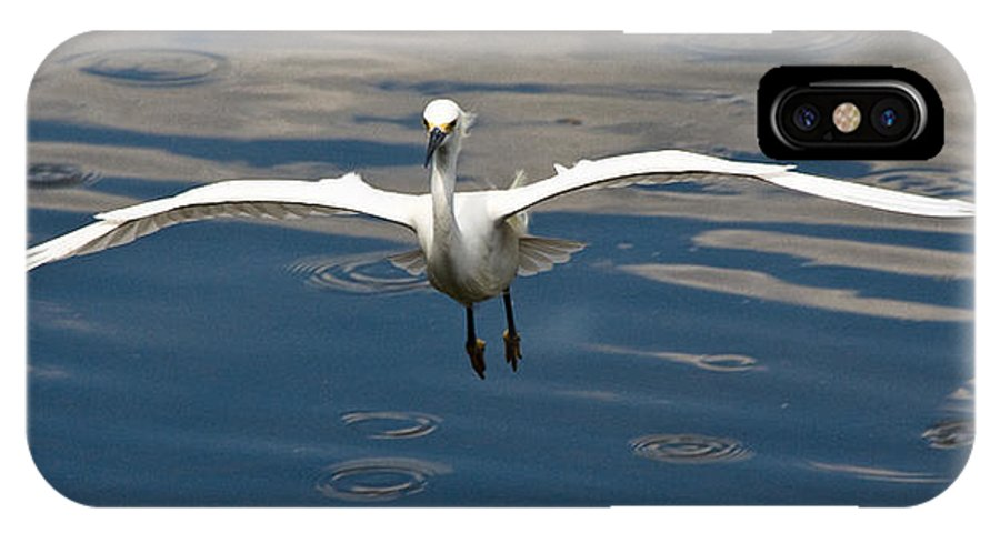 Snowy Egret IPhone Case featuring the photograph Gear Down by Christopher Holmes