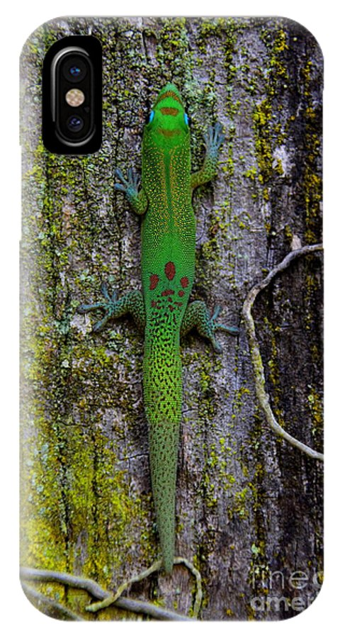 Gold IPhone X Case featuring the photograph Gecko On Tree Bark by Jackson Kowalski
