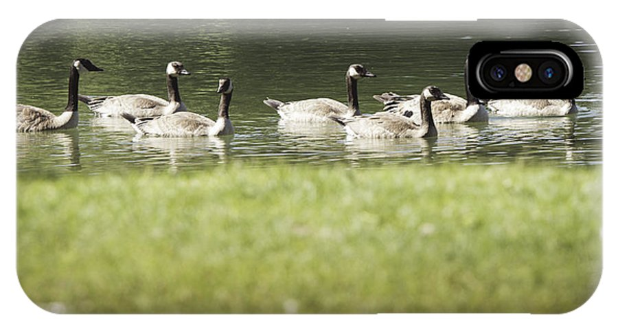 Wildlife IPhone X Case featuring the photograph Geese At Spring Meadow by Chloe Katsilas