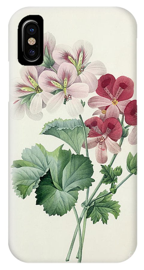 Geranium IPhone X Case featuring the drawing Geranium Variety by Pierre Joseph Redoute