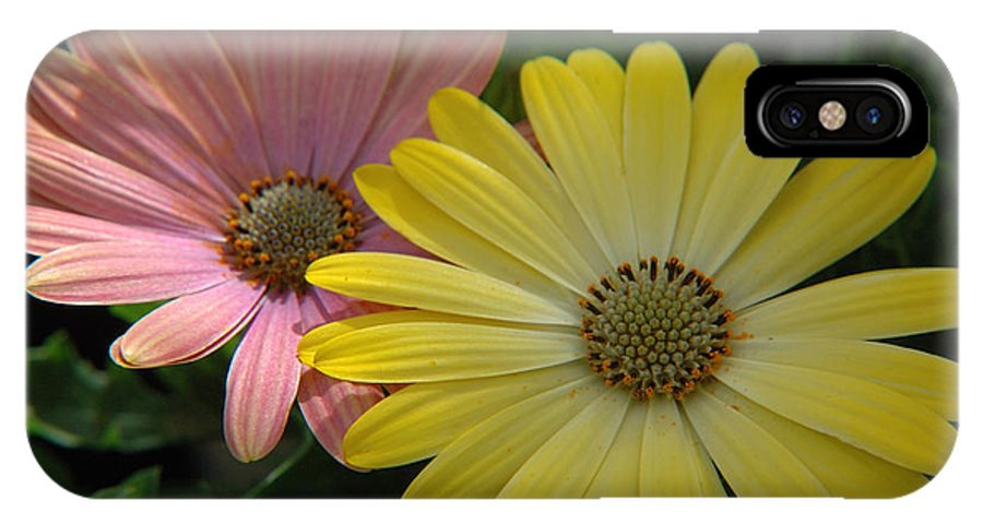 Flower IPhone X Case featuring the photograph Gerber Daisies by Jerry McElroy