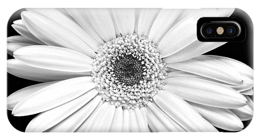 Gerber IPhone X Case featuring the photograph Single Gerbera Daisy by Marilyn Hunt