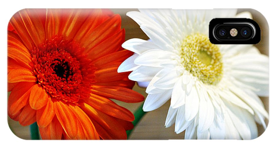 Flower IPhone Case featuring the photograph Gerbers by Marilyn Hunt