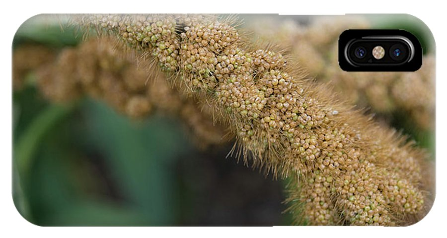 Food IPhone X Case featuring the photograph German Millet by Monika Tymanowska