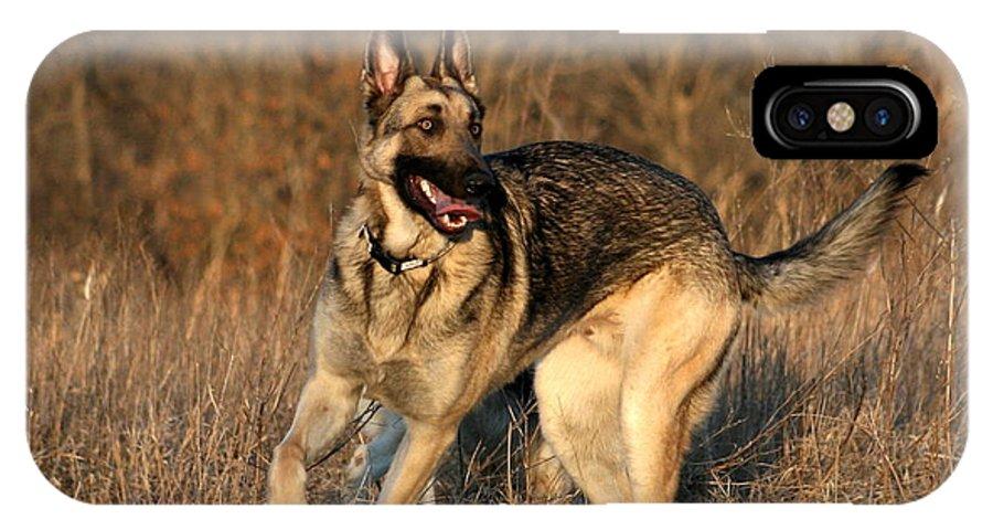 Animal IPhone X Case featuring the photograph German Shepherd 1 by David Dunham