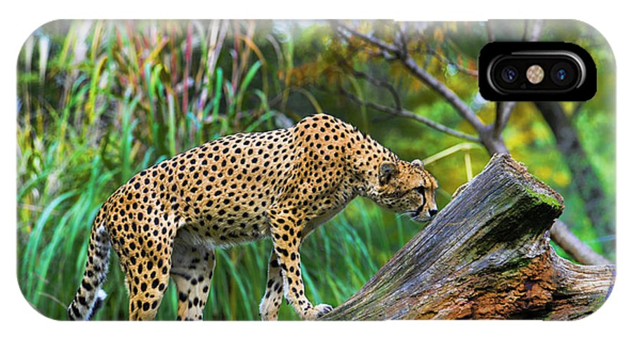 Cheetah IPhone X Case featuring the photograph Getting The Scent by Keith Lovejoy