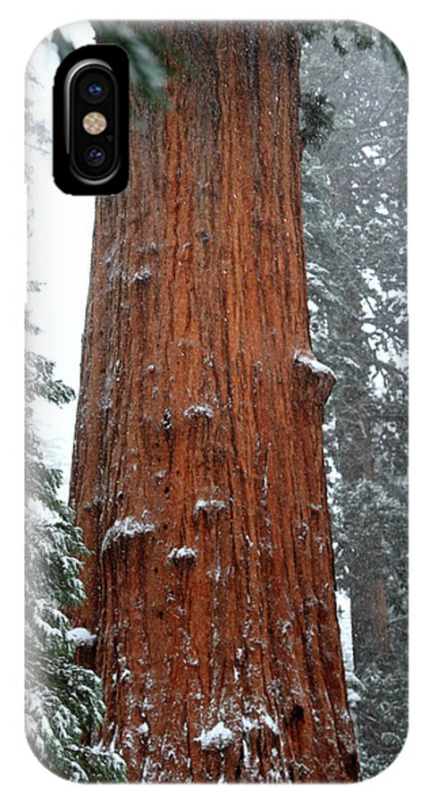 Sequoia IPhone X Case featuring the photograph Giant Sequoia Tree by Pierre Leclerc Photography