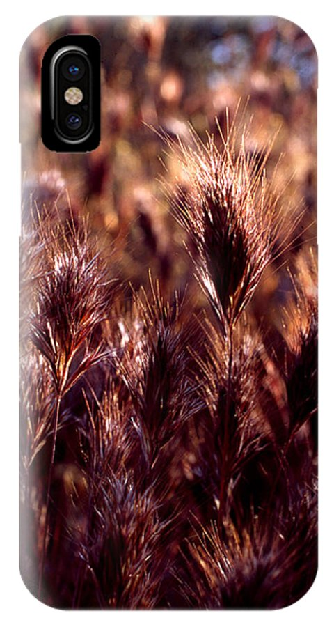 Nature IPhone X Case featuring the photograph Gideon by Randy Oberg