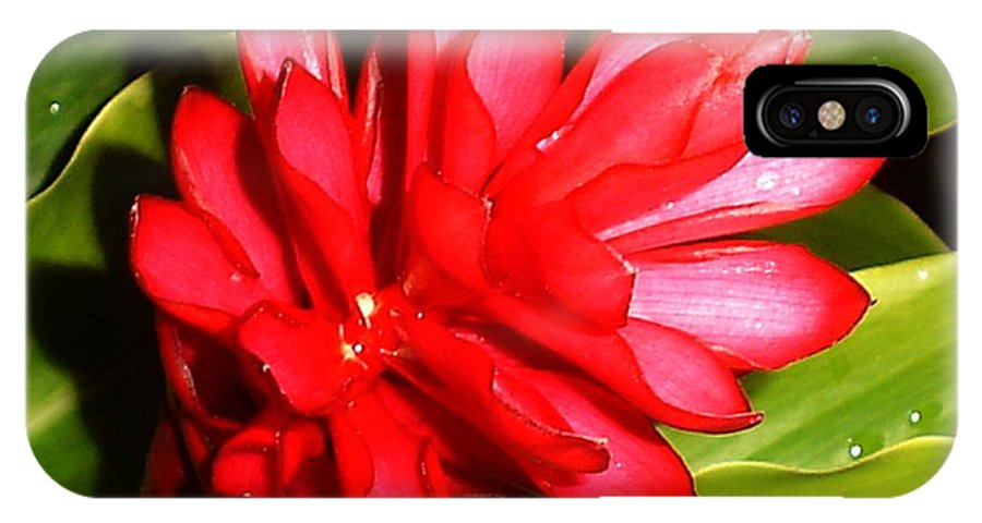 Ginger Flower With Geko IPhone Case featuring the photograph Ginger With Geko by Chandelle Hazen