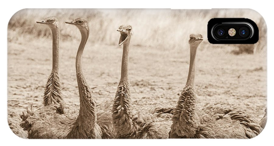 Ostriches IPhone X Case featuring the photograph Girl Talk by Chris Scroggins