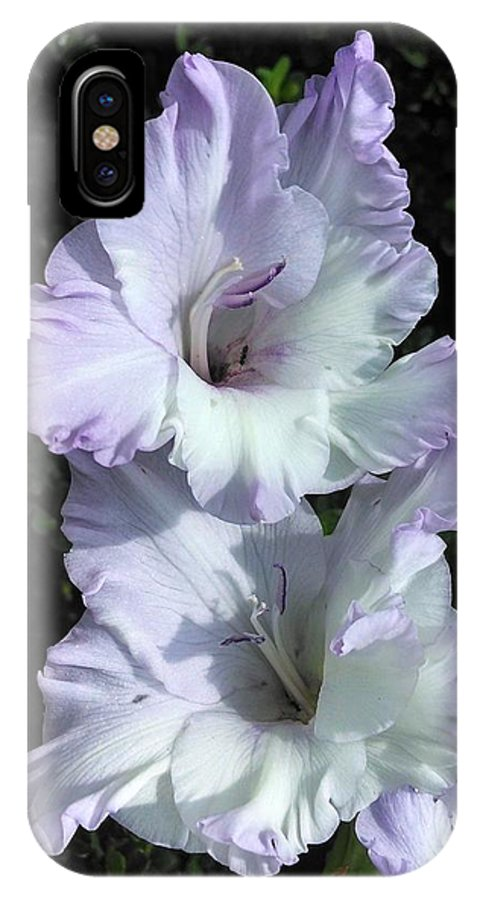 Gladiola IPhone X / XS Case featuring the photograph Glad Purple Perfection by Tammy Finnegan